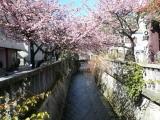 あたみ桜糸川