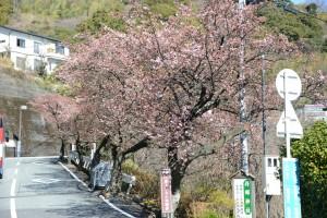 桜0131-5