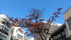 コピー ~ 糸川1月22日