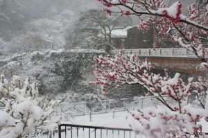 梅園野「雪