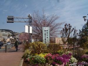 親水公園花
