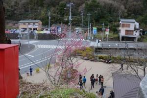 桃の花 梅園入り口